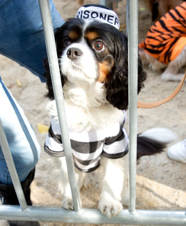23rd Annual Tompkins Square Park Halloween Dog Parade-NY