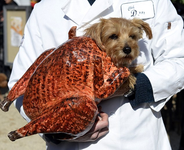 A dog dressed as a turkey participates i