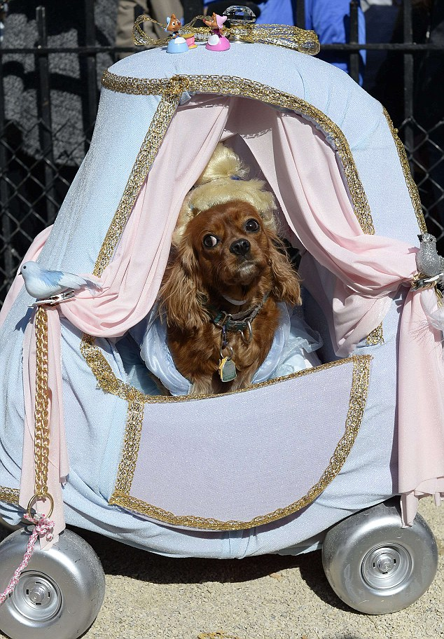 "A dog dressed as ""Cinderella"" participat"