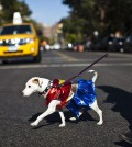 A dog in costume crosses a street to attend the 23rd annual Tompkins Square Halloween Dog Parade in New York