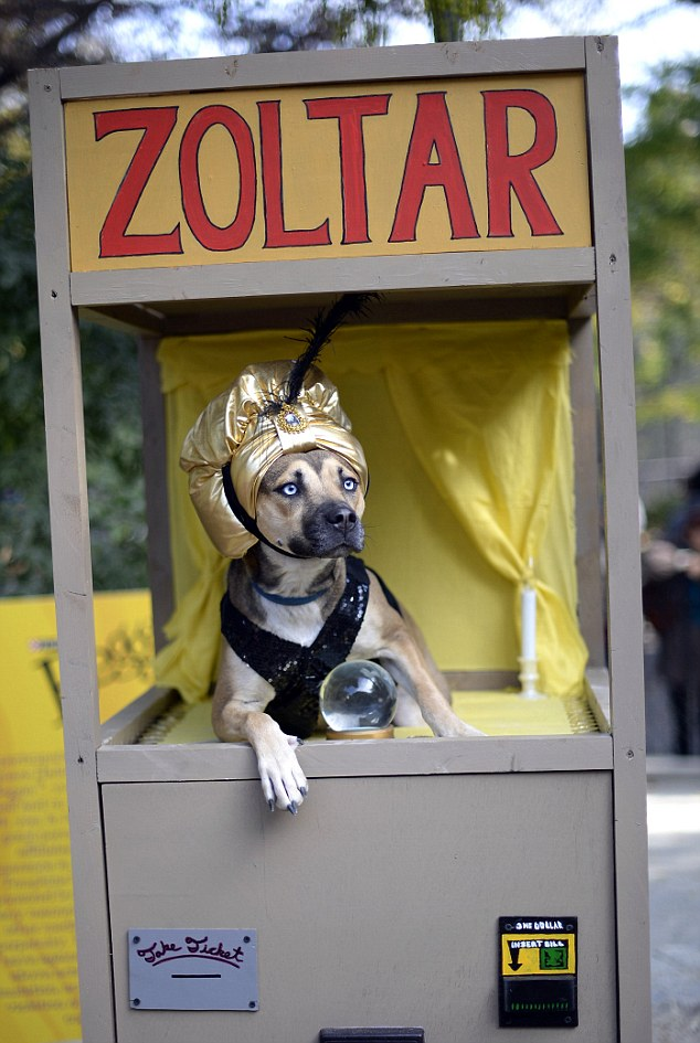 TOPSHOTSA dog dressed as a Zoltar fortu