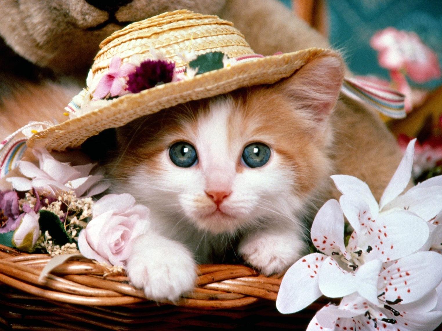 cute-cat-wallpapers-kittencute-cat-wallpaper-desktop-xpx-kb-culut-xtwoemm