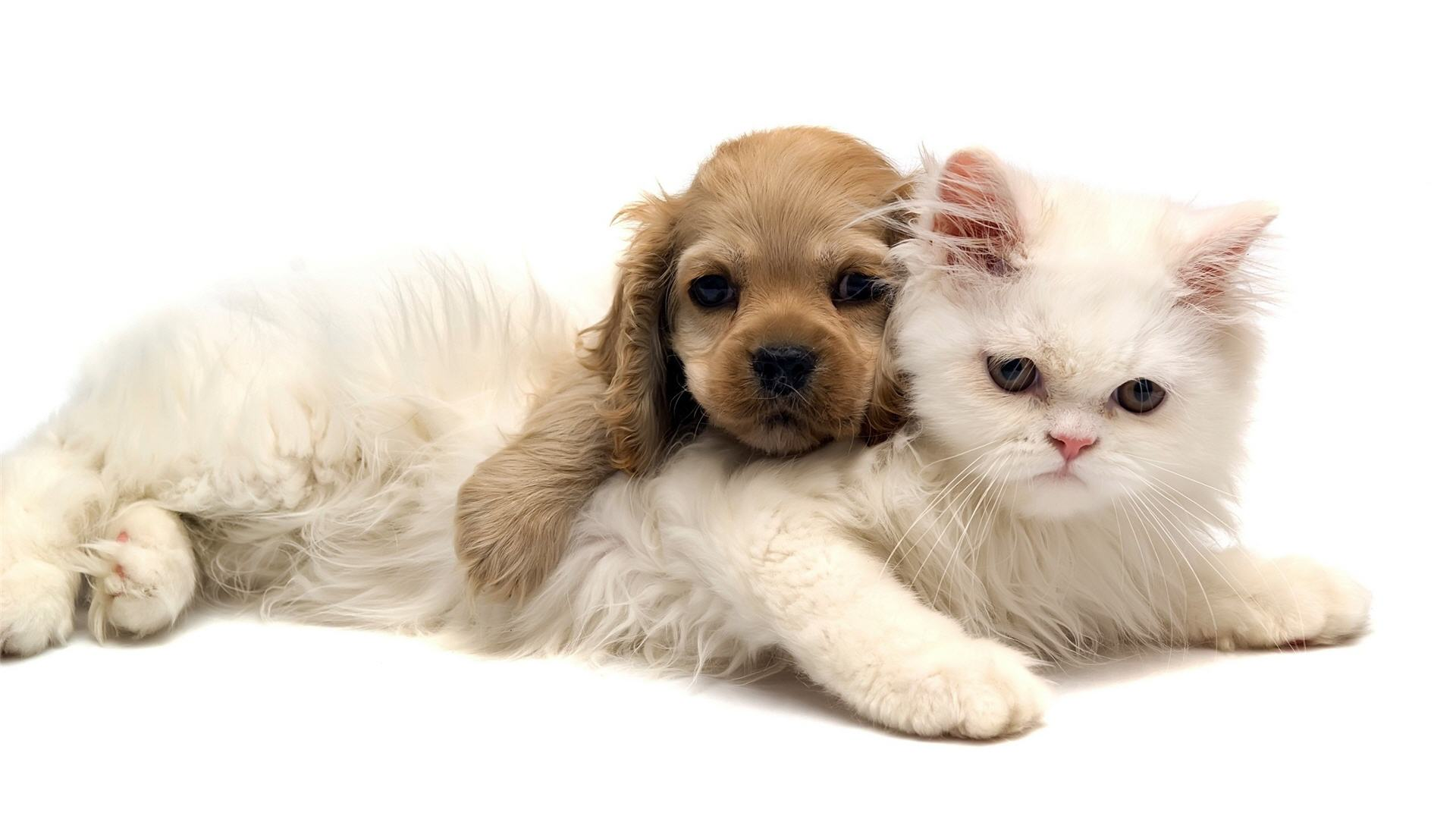 pics-of-cute-cats-and-dogs-6