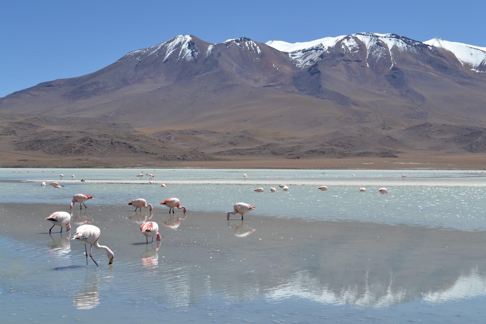 flamingos_Salar_de_Uyuni_Bolivia