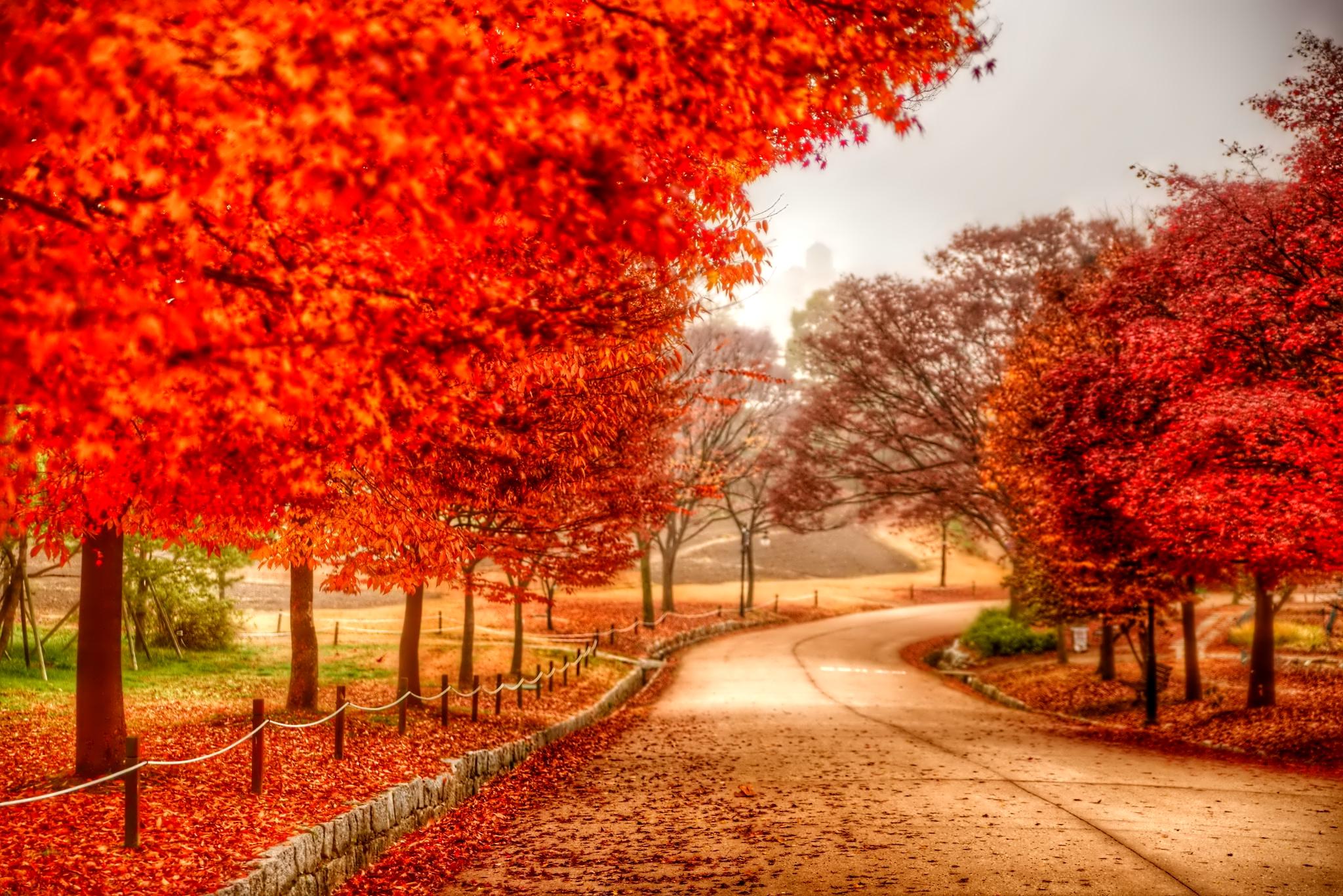 november_foliage_trees_reflection_nature_1024x600_hd-wallpaper-1617534