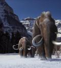 Woolly Mammoth 3