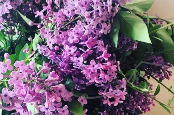 Πασχαλιά ή Απρίλης: το λουλούδι της άνοιξης και ο μύθος του για την Ανάσταση του Χριστού