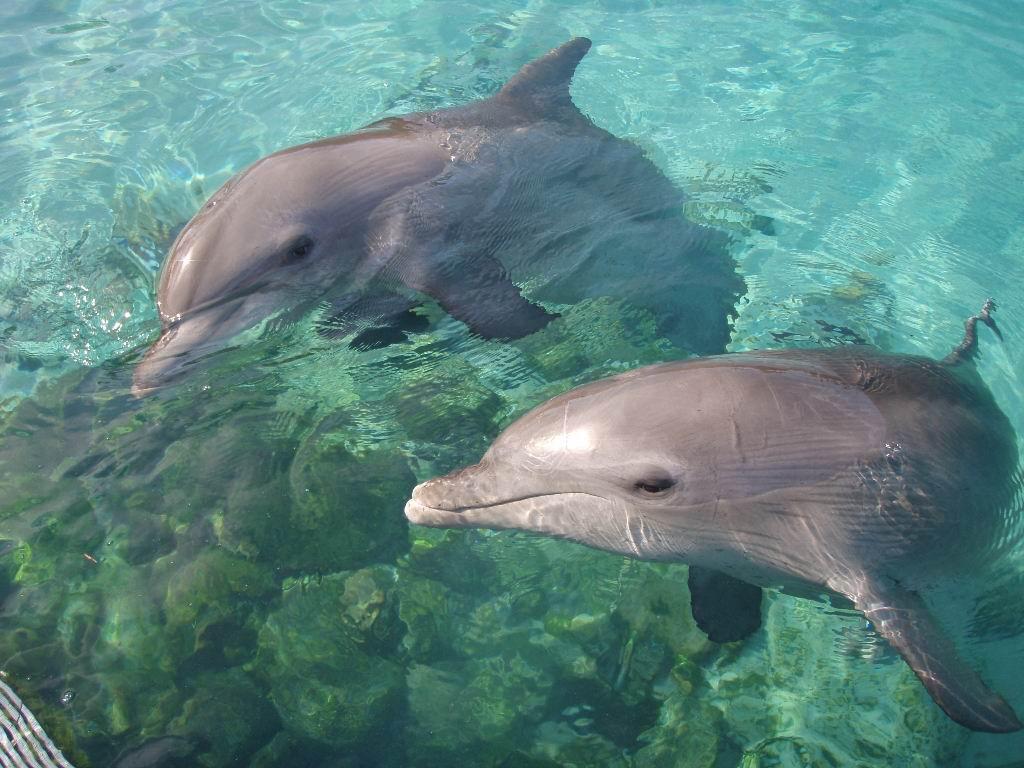 Δελφίνι δελφινάκι
