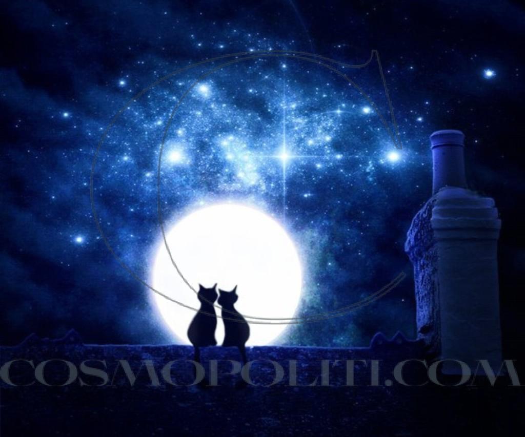 kittens_romantic_night_full_moon_kitties_hd-wallpaper-1737455