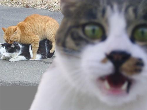 Συγκλονιστικά γατίσια photobombings!