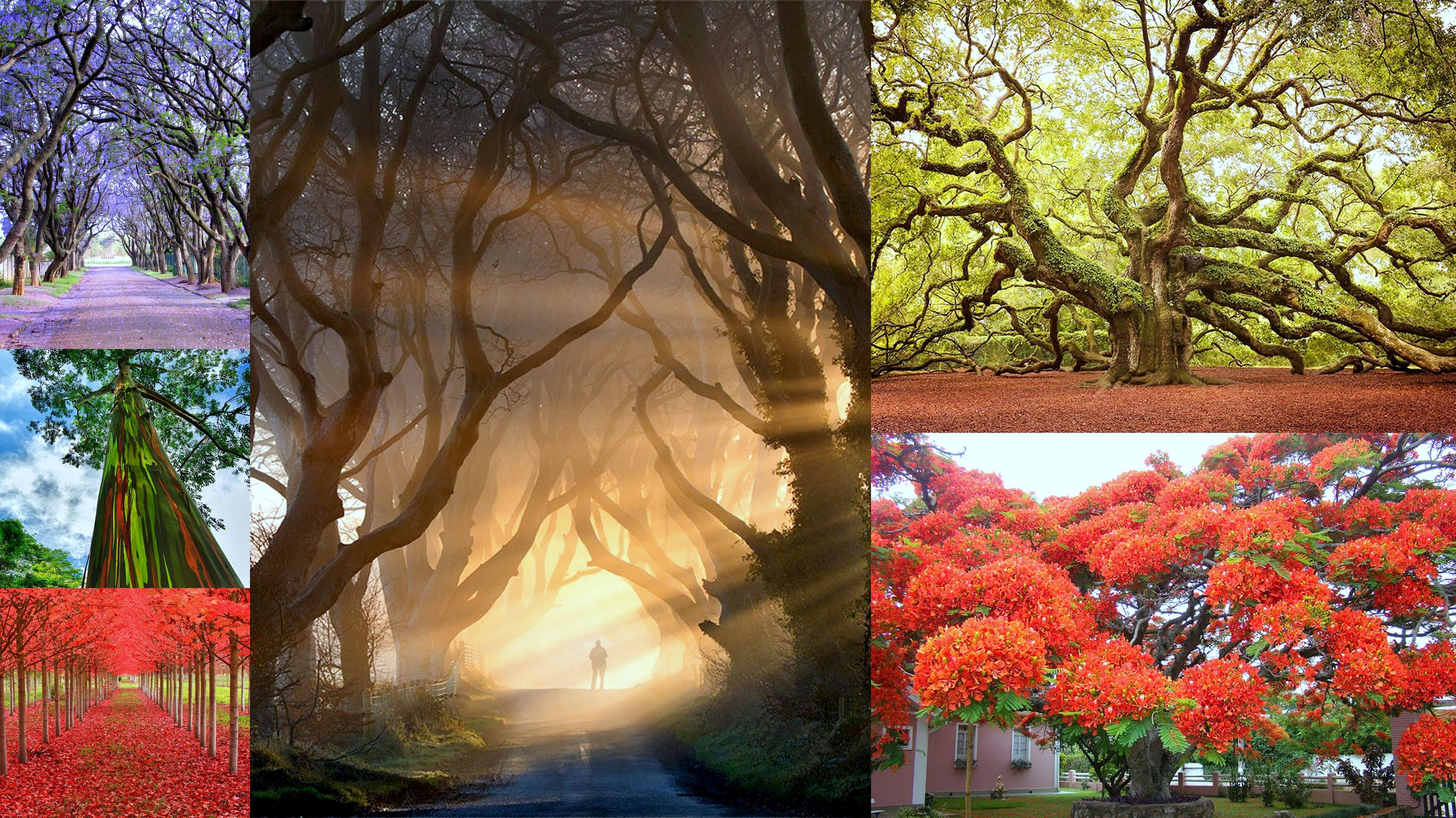 Πανόραμα φωτογραφιών: τα 16 πιο όμορφα δέντρα του κόσμου