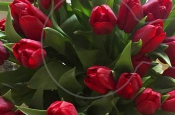 Λουλούδια..