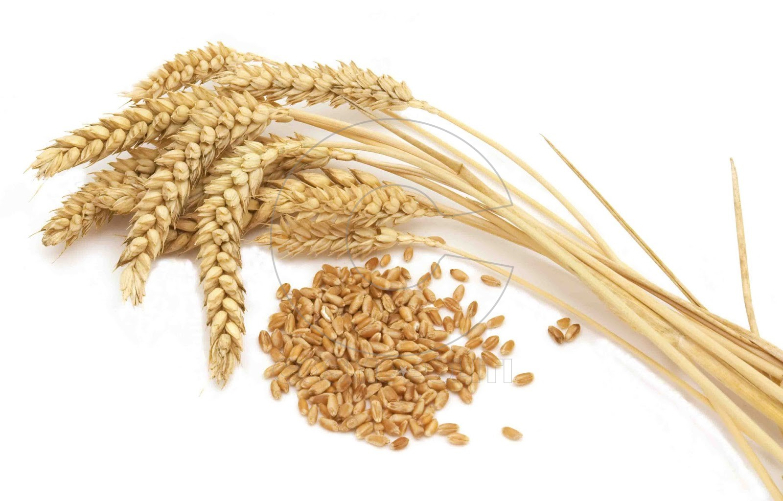 5776935-agriculture-wheat-golden-dried-fiels-crop-texture-background-herbalhome-6