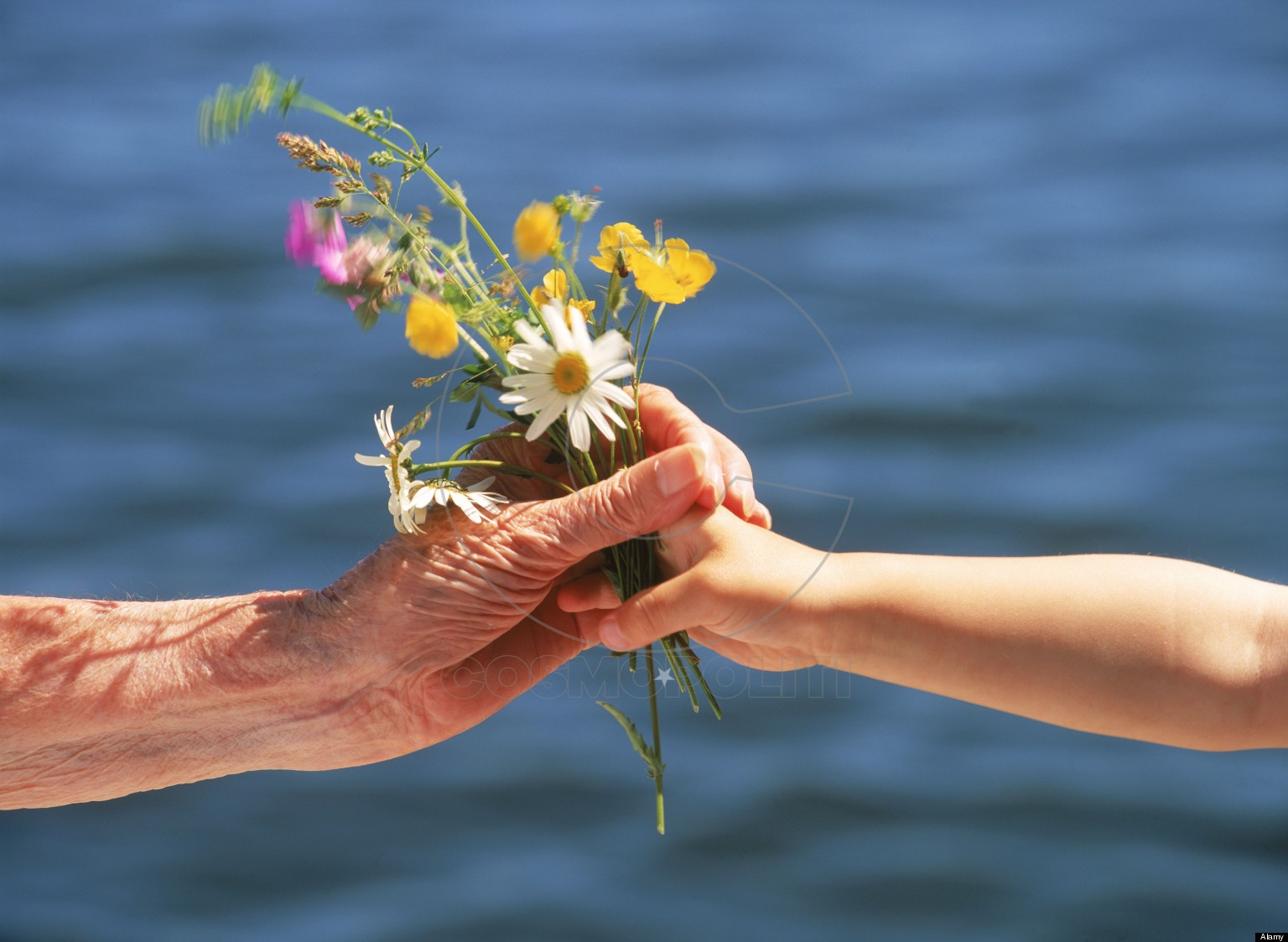 ABNHKB Grandchild offering small bouquet of summer wild flowers to grandmother