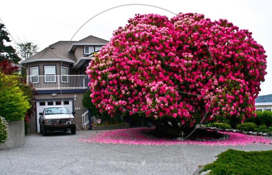 151355-R3L8T8D-880-amazing-trees-7