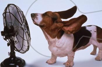 Καύσωνας: 8 απλοί τρόποι για να δροσιστείτε όταν ανεβαίνει η θερμοκρασία