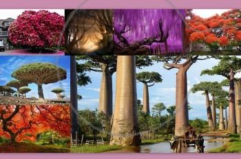 Αυτά είναι τα 15 πιο όμορφα δέντρα του κόσμου