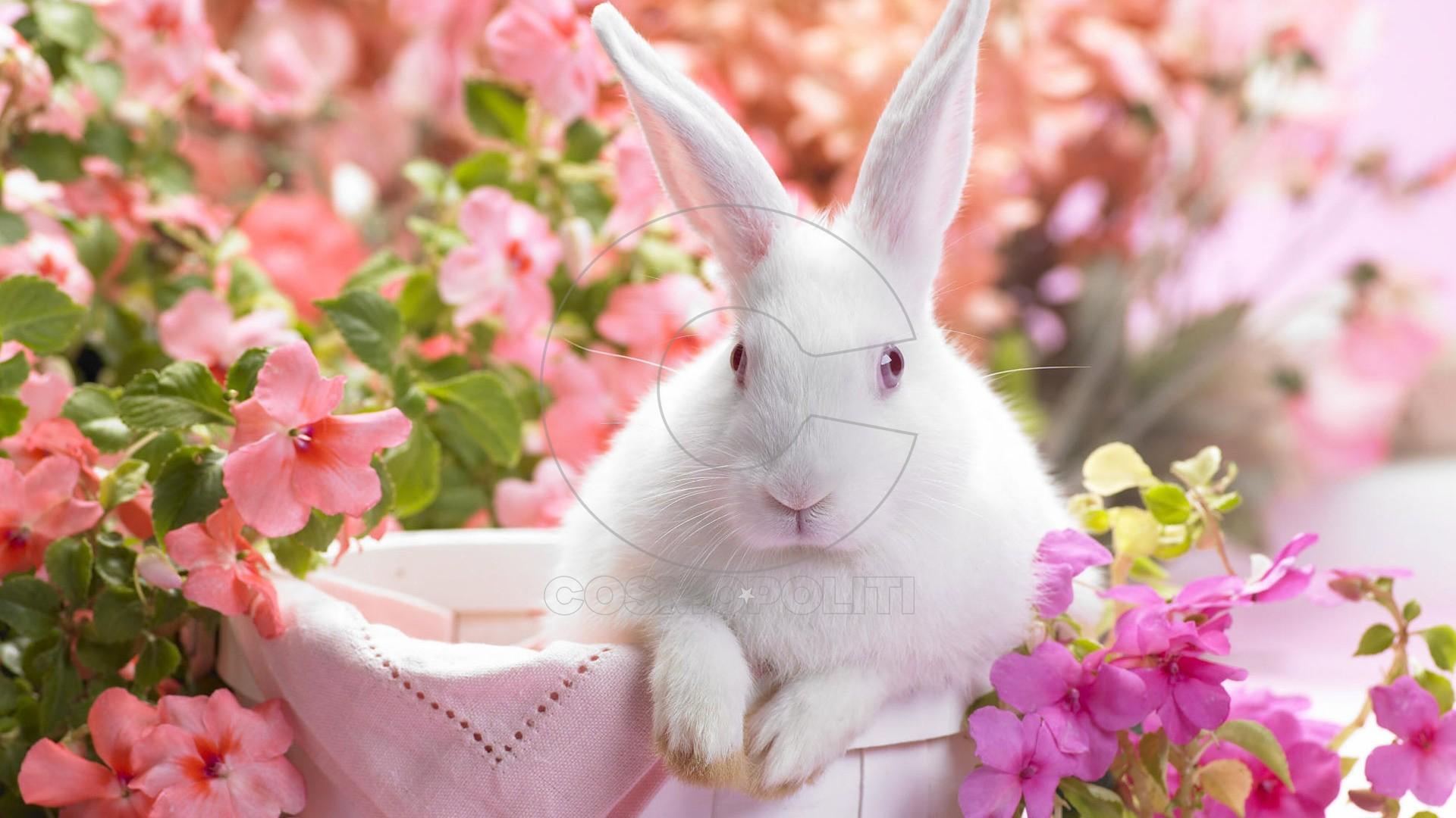 cute-white-rabbit
