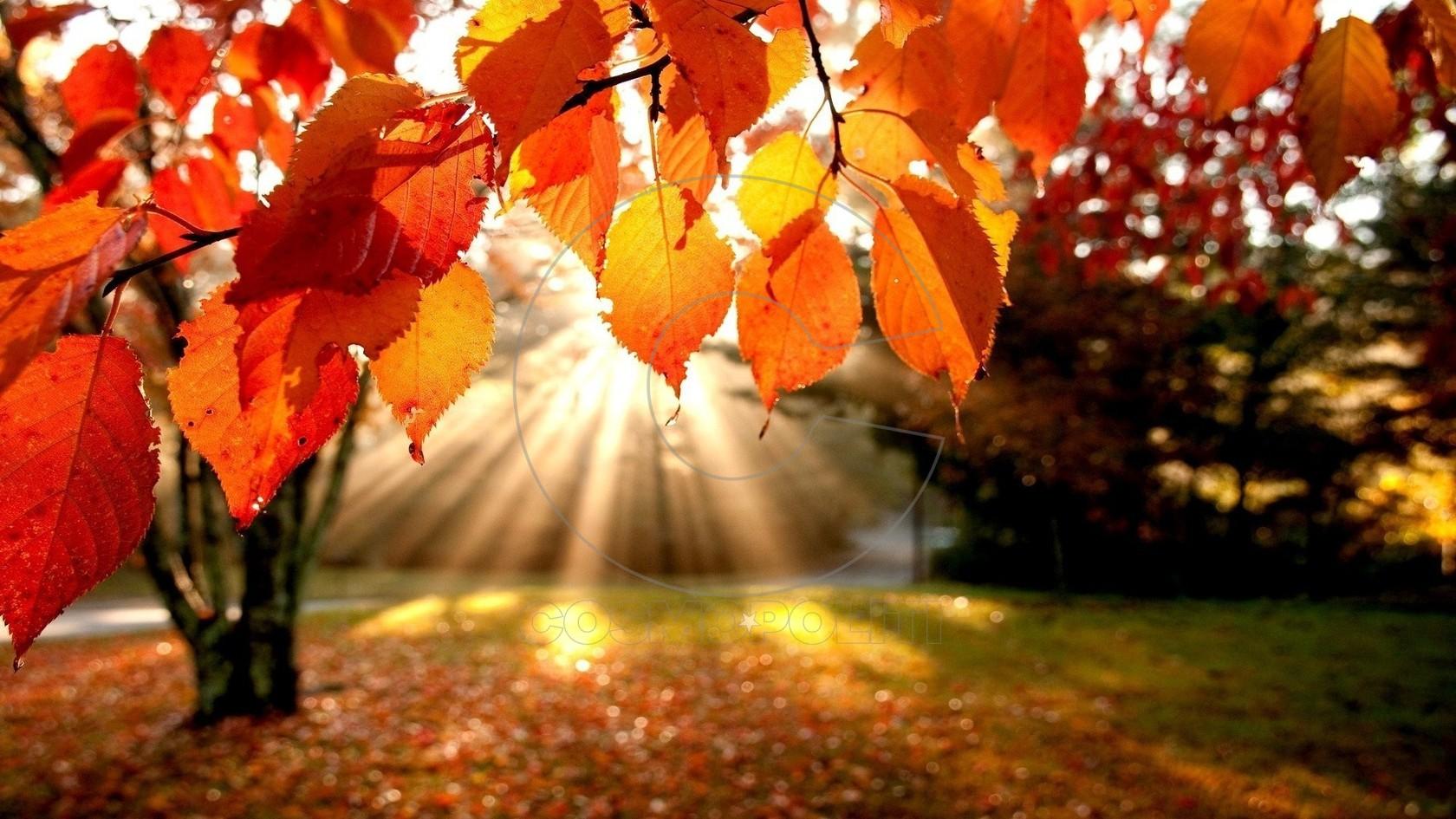 1395364828-autumnleaves-jpg-original