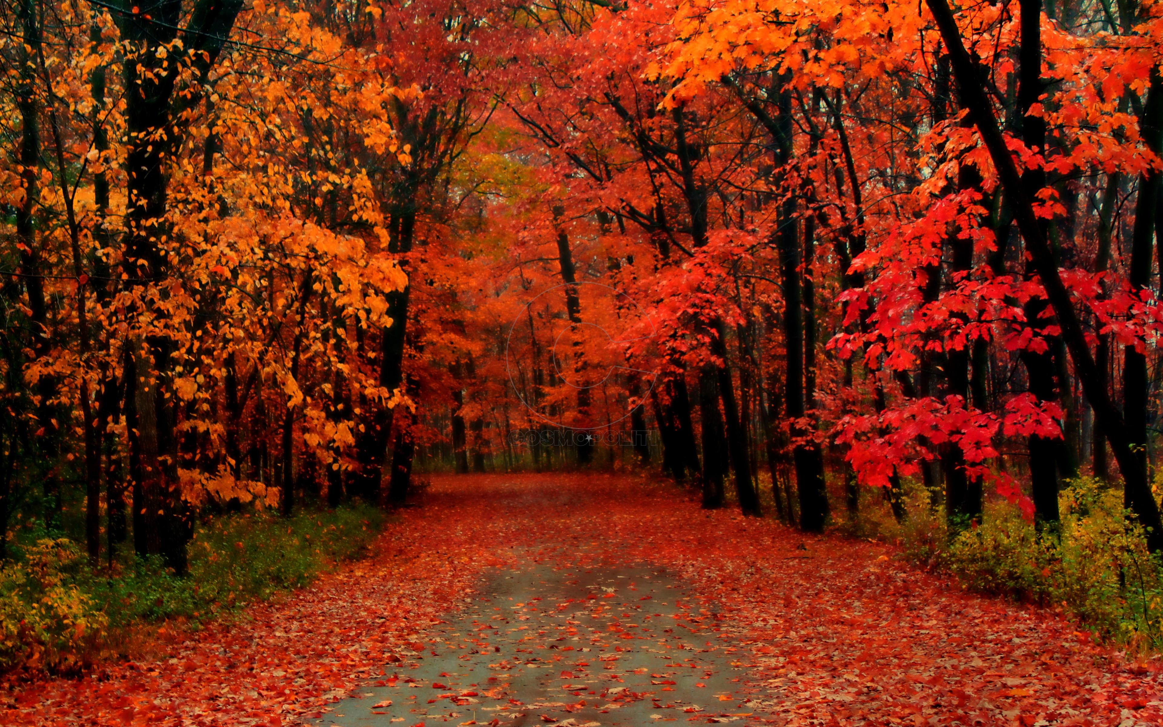 autumn-017