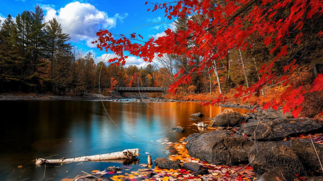 autumn-lake-fall-oxtongue-river
