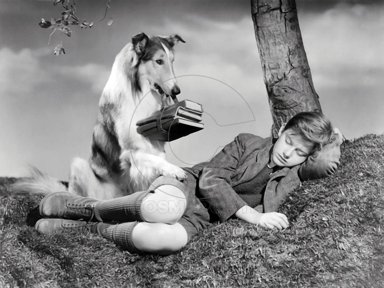 1944 Lassie Come Home Roddy Mc Dowall & Lassie