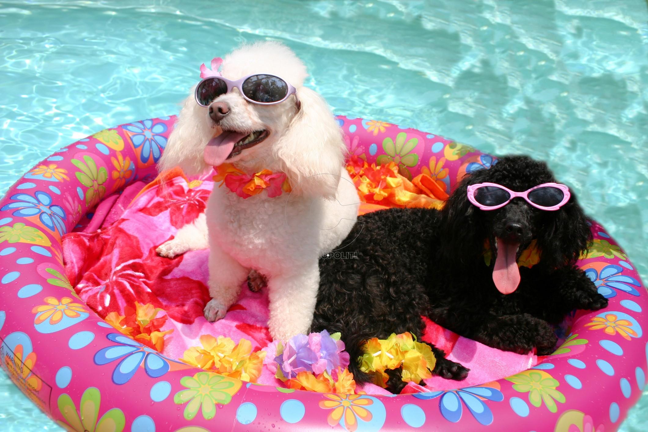 dog-cat-pet-food-water-bowl-4