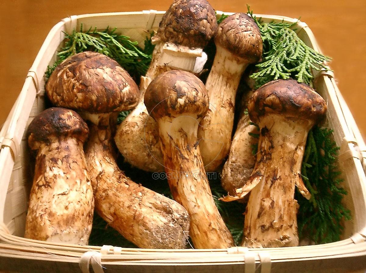 Το μανιτάρι Ματάκε ή Ματσουτάκε είναι το πιο ακριβό στον κόσμο. Φυτρώνει  κυρίως στην Ιαπωνία e0458c1fa09