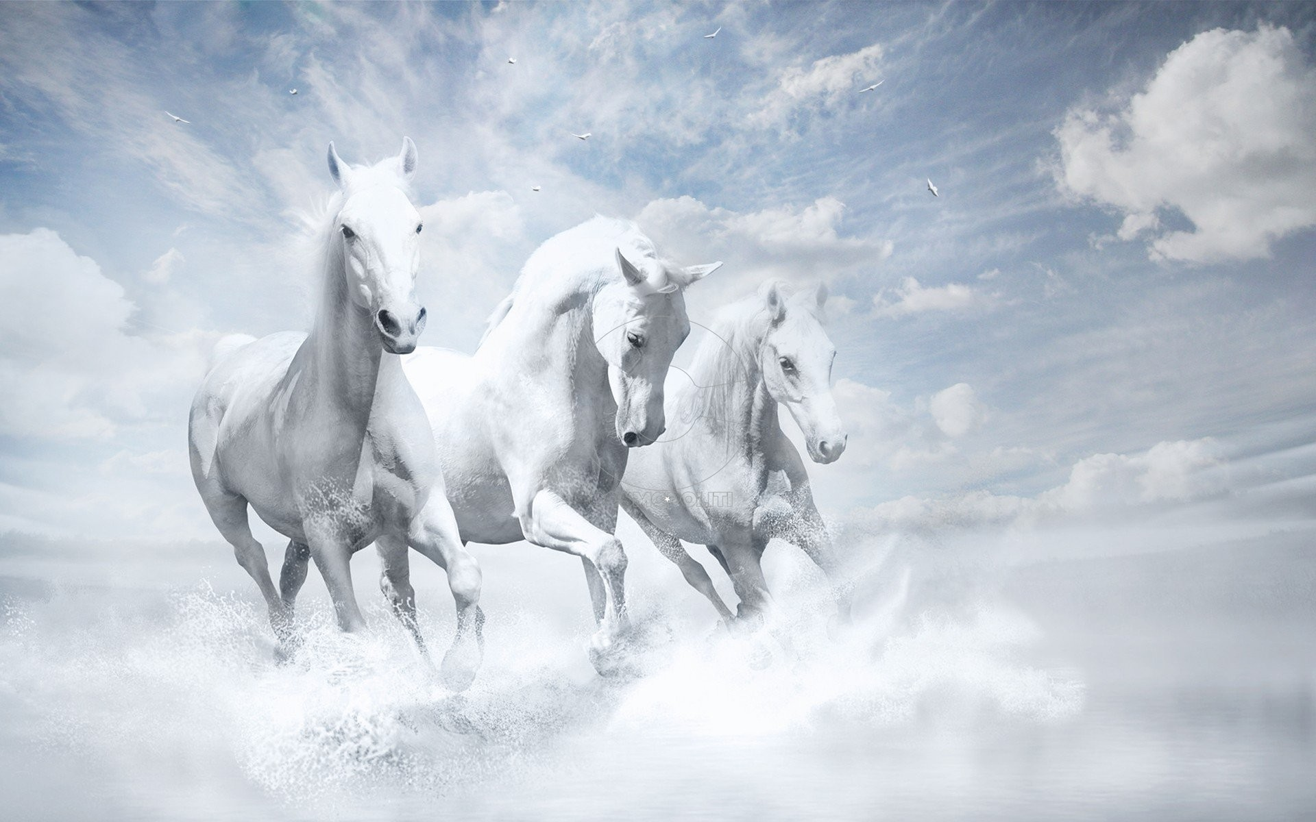 white-horses-hd