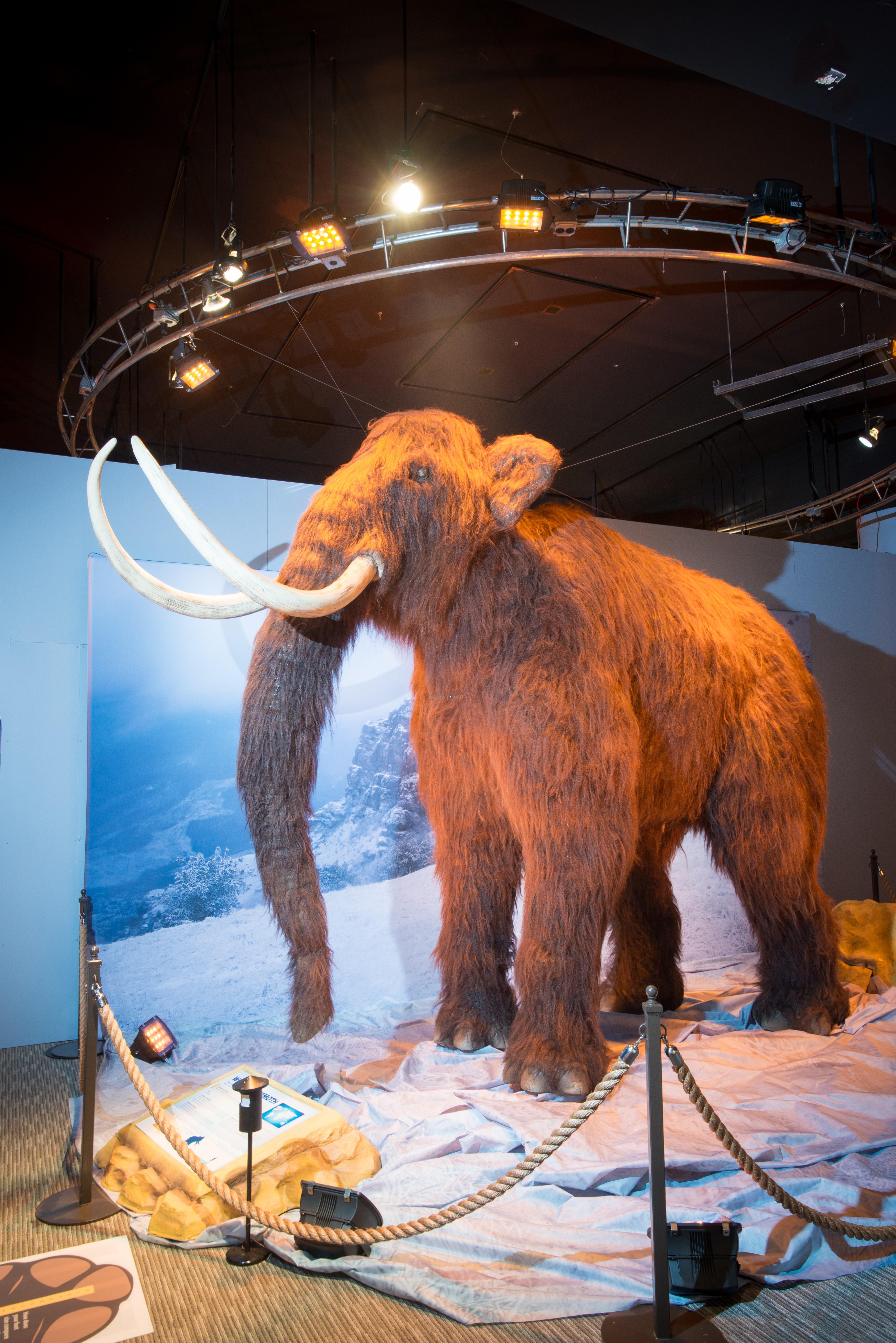 Woolly Mammoth_Both