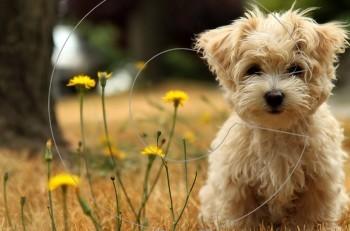 10 μυστικά που δεν σας λέει o σκύλος σας – και πρέπει να ξέρετε!