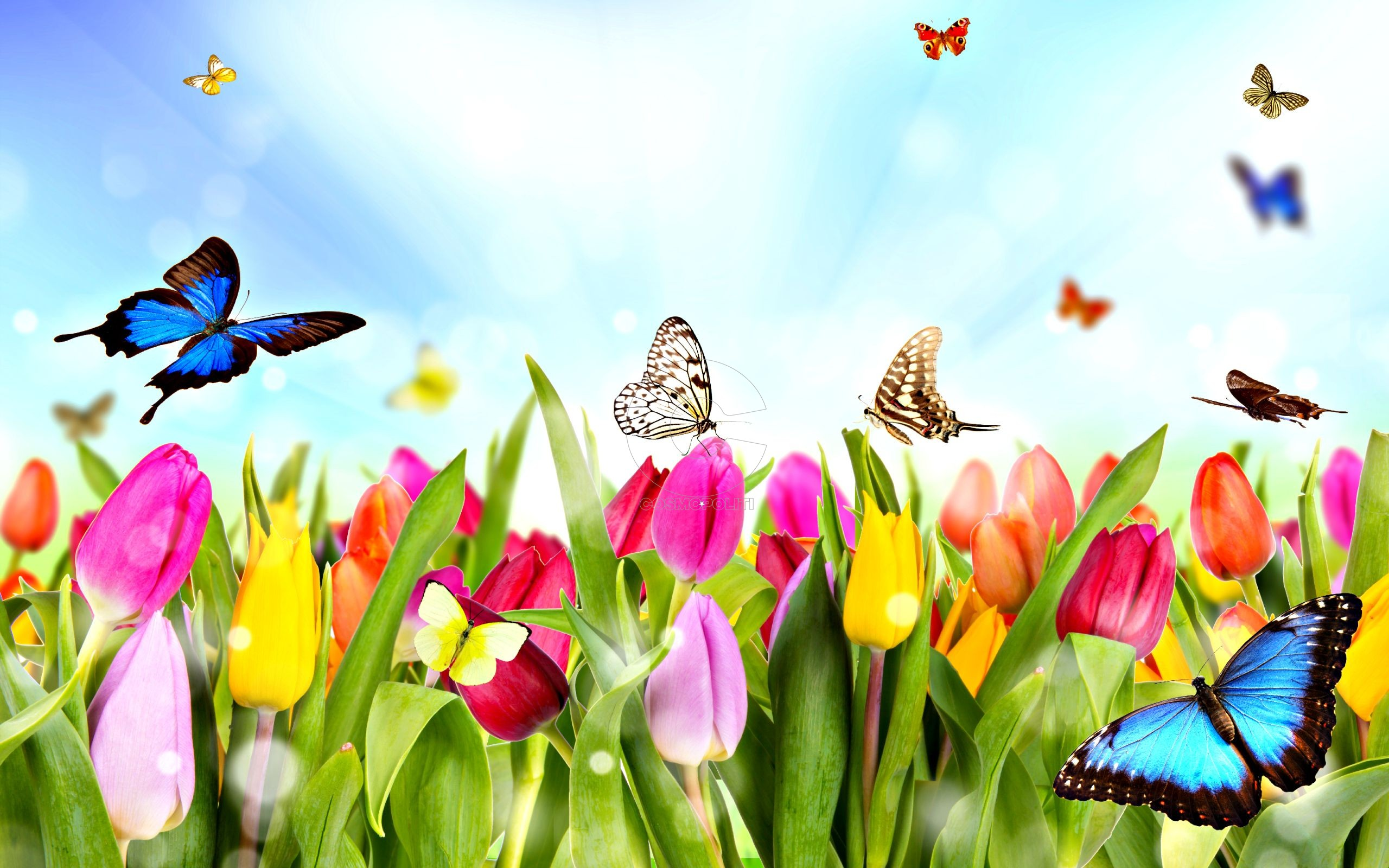 224206062-images-of-spring