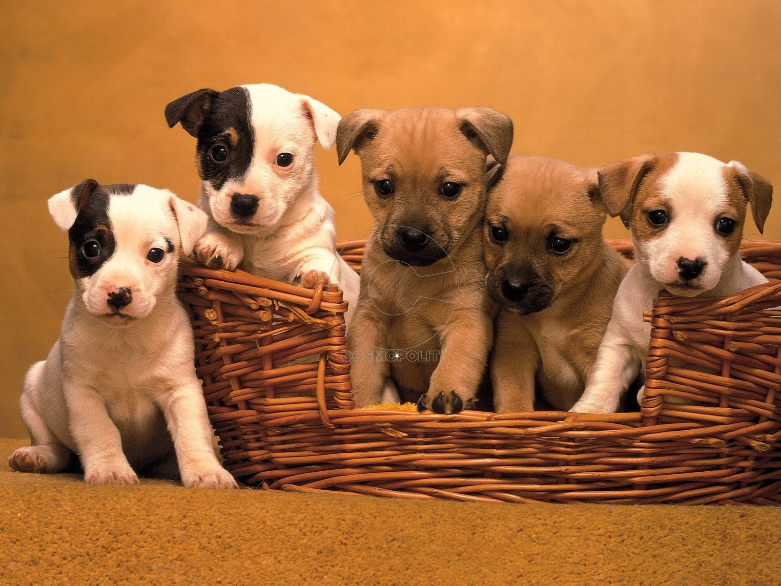 cute-puppy-pictures-2