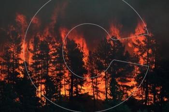 """""""Οι φωτιές στα δάση είναι φυσιολογικό φαινόμενo, ποιοι είναι οι εμπρηστές και ποιοι οι μεγάλοι ένοχοι…"""""""