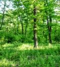 lush-green-forest-near-varna
