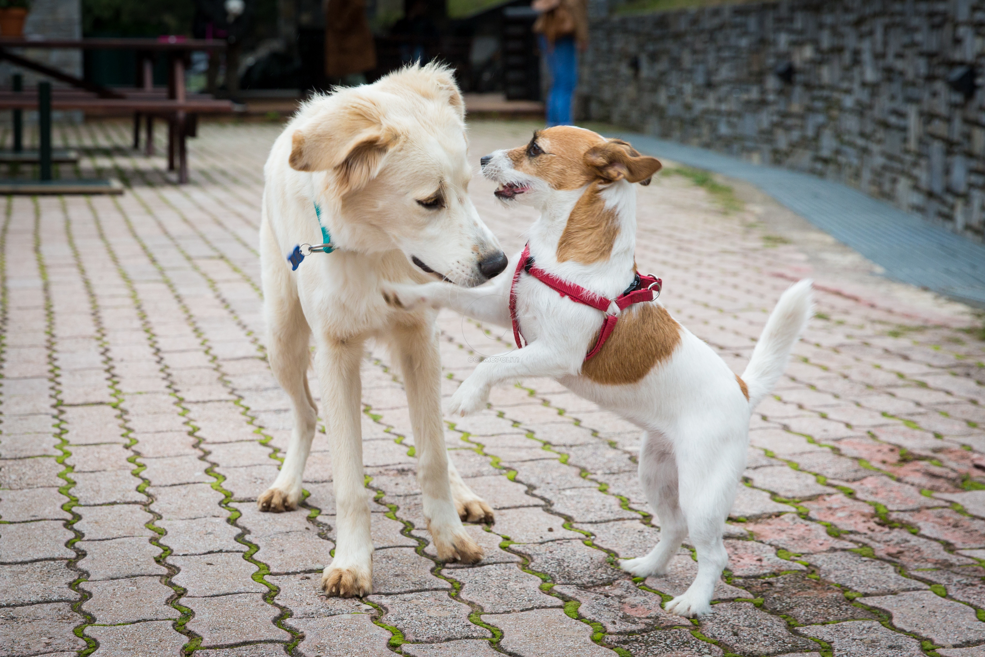 Dog Weekend_13