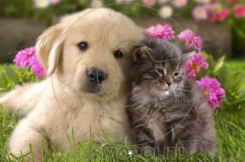 Είσαι τύπος για σκύλο ή για γάτα; μάθε σε 10 βήματα!