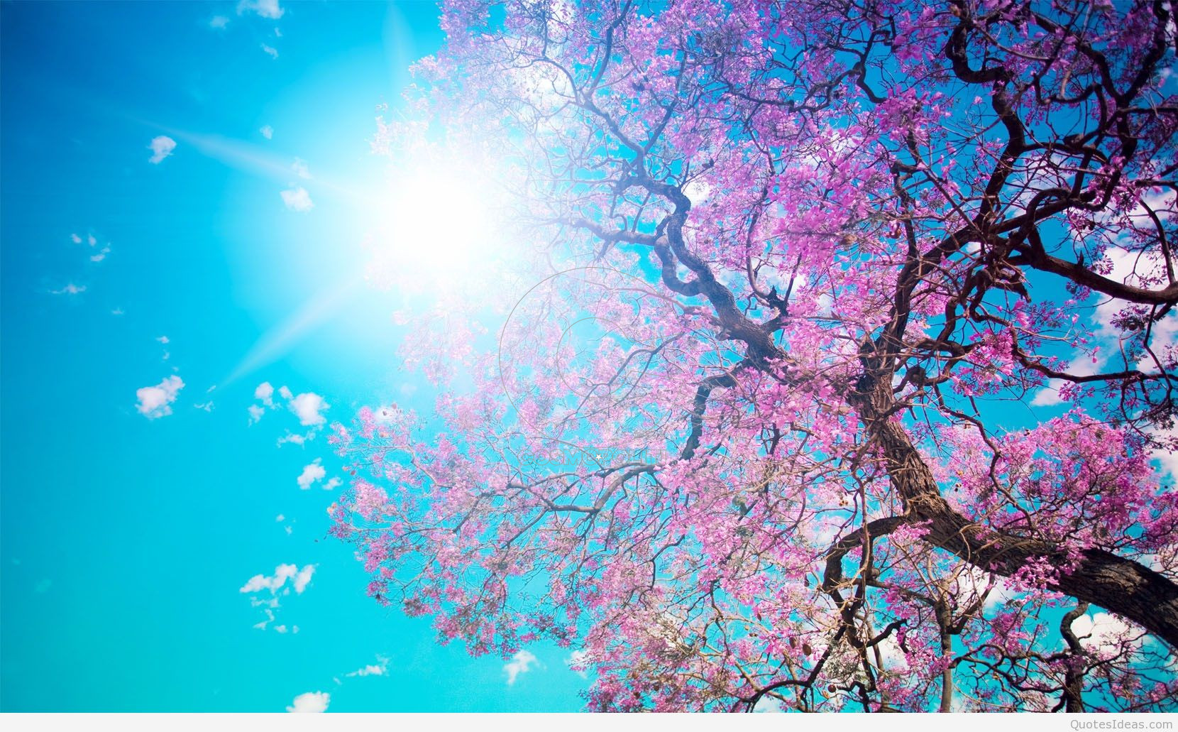 beautiful-spring-nature
