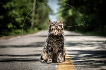 Cinetroll: Ποιος θέλει να θάψει το ζωάκι του στο «Νεκρωταφίο Ζώων» του Στίβεν Κινγκ;