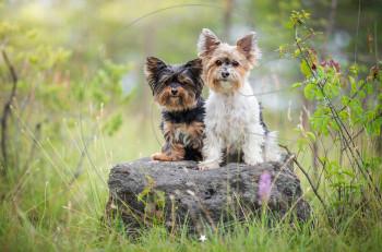 10 μυστικά που δεν σας λέει ο σκύλος σας και πρέπει να ξέρετε!