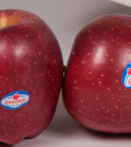 apples double - Αντίγραφο